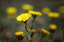 Frühling_022_1