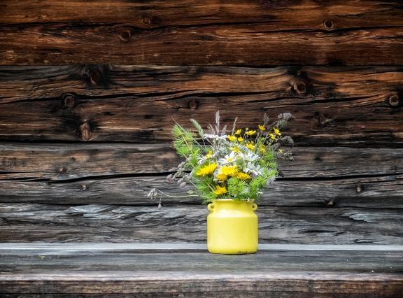 Blumen aus dem Lesachtal